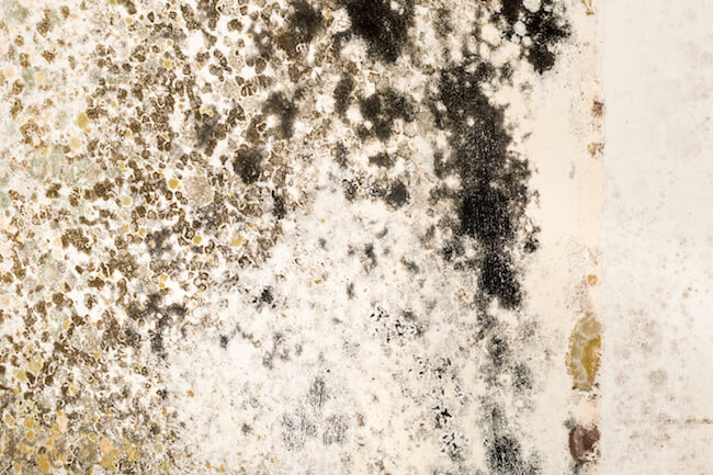 Black mold in a house