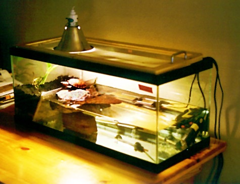 ... UVB light. i got my turtle a 5.0 UVB tropical light where is the best