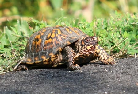 my baby box turtle isnt really eating and keeps acting like
